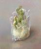 In plastic / fennel root