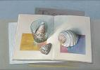 Shells on catalogue